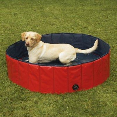A PVC dog pool is sturdy and easy to store.