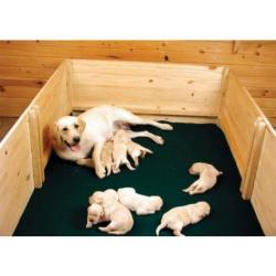Whelping box with liner