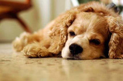 Puppy feeling down