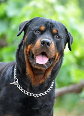 Best Large Dog Breeds For A Family