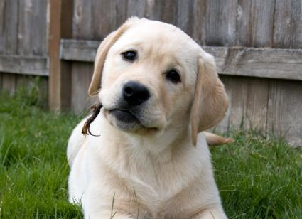 Cute Puppy Names For Small Dogs