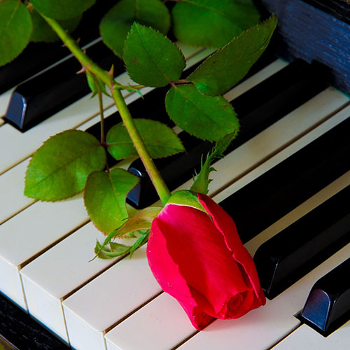 Red-rose-on-the-piano.jpg