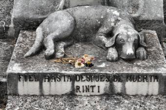 Grave marker depicting dog lying on stone
