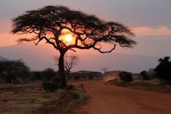 Sun setting through a tree in Africa