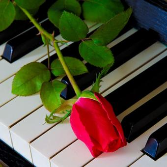 https://cf.ltkcdn.net/dying/images/slide/212805-500x500-Red-rose-on-the-piano.jpg