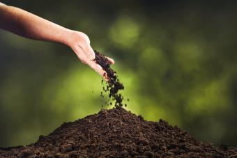 Hand pouring black soil