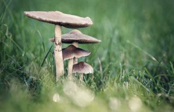 What Is a Mushroom Burial Suit? Facts and Process