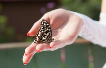 Significance of Butterflies in Association With Death