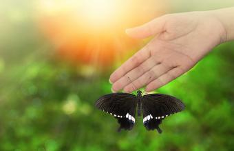 Butterfly perching on woman hand