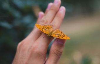 Orange butterfly on hand