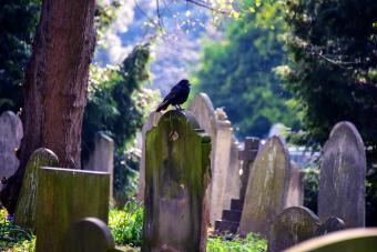 Which Birds Are Symbols of Death?