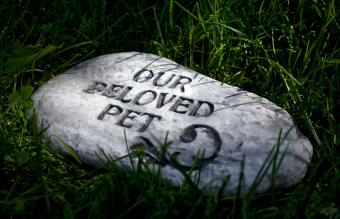 Dog Cremation Costs and Common Questions