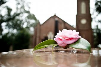 Pink rose on a grave