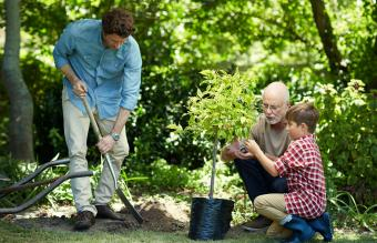 Guide to Planting a Tree in Memory of a Loved One