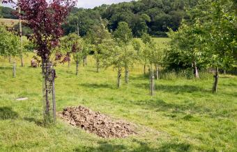 Natural environmentally friendly burial site