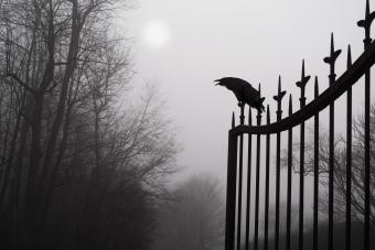 A raven sits atop a wrought iron fence cackling at the moon at the entrance of a foggy cemetery