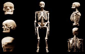 Human skeleton anatomical death