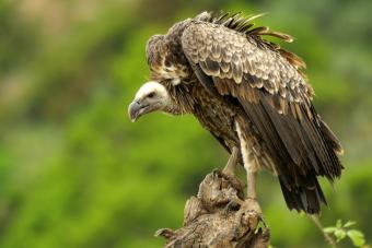 Vulture sitting on tree steam