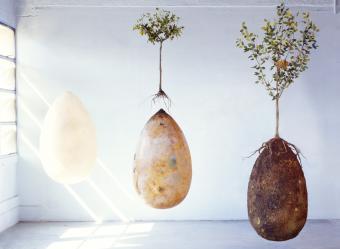 Life cycle of a biodegradable capsulamundi