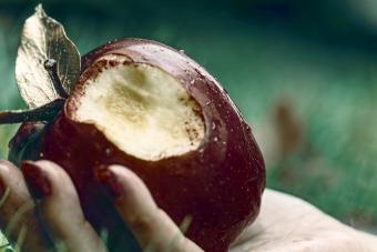 Bitten Apple On Hand