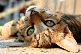 Tips About Grieving for a Beloved Cat