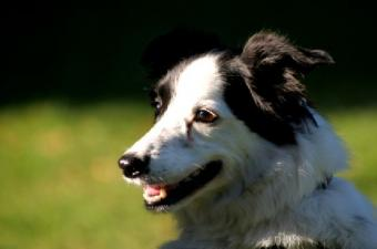 Ohio Pet Burial Services and What They Offer