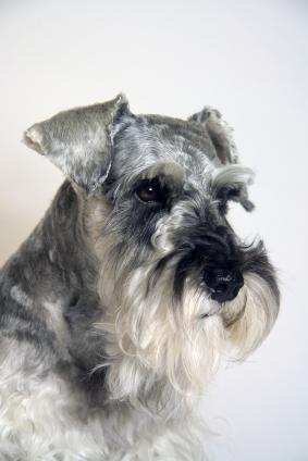 Places to Buy a Dog Urn for Your Pet's Ashes