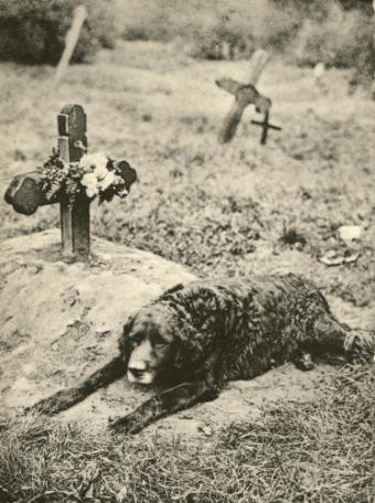 https://cf.ltkcdn.net/dying/images/slide/74569-373x500-victorian2.jpg