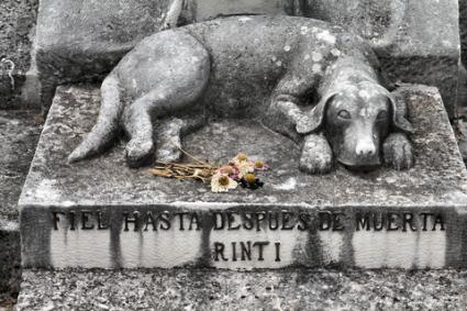 Grave marker depicting dog lying on stone