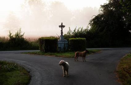 Dogs on rural road