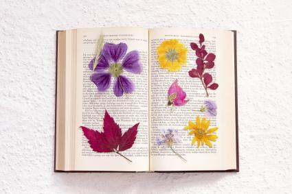 Pressed flowers in an old book