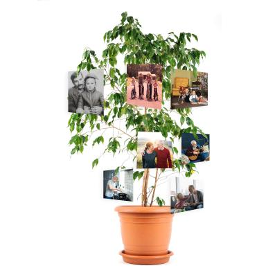 tree of life memorial photo display