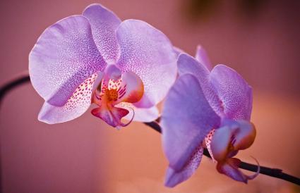 Flower Blooming Outdoors