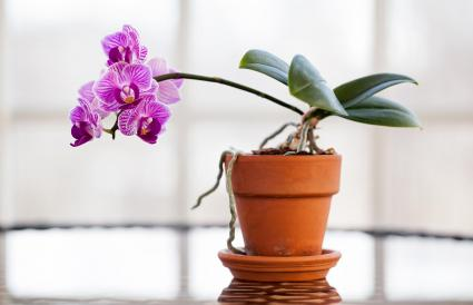 Orchids growing in plant