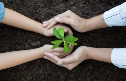 Hands of children planting a seed