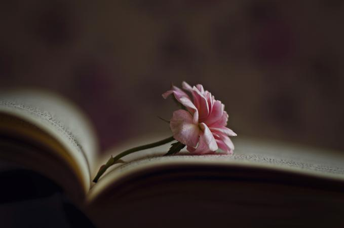 Little rose inside an old book