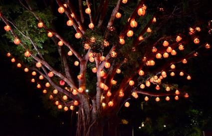 Lanterns in Trees