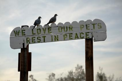 Newly-bereaved pet owners may find comfort in Bible verses