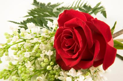 Inexpensive single red rose for a funeral