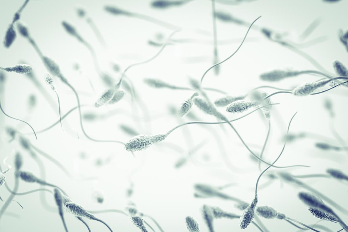 genetica-espermatozoides.jpg