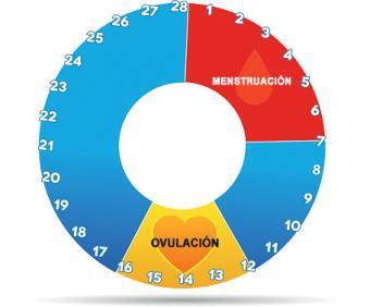 Gráfico del ciclo menstrual