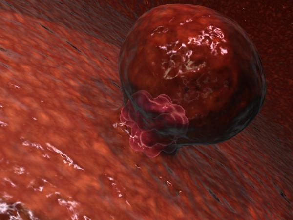 Implantación de Blastocisto
