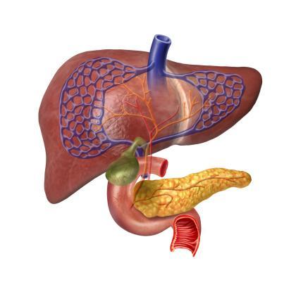 Human Liver system