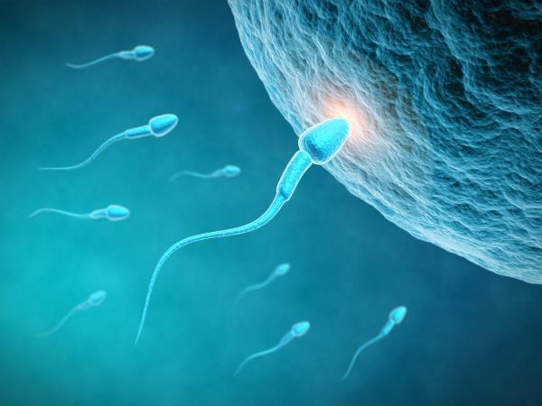Ovulo y esperma