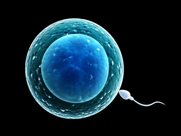esperma y óvulo