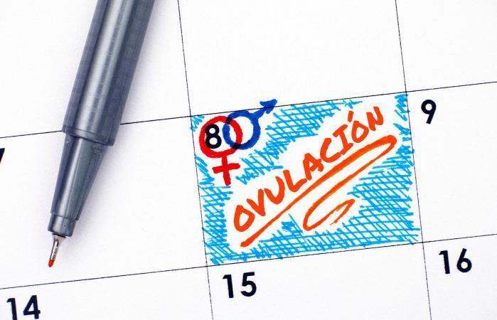 Calendario para predecir la ovulación