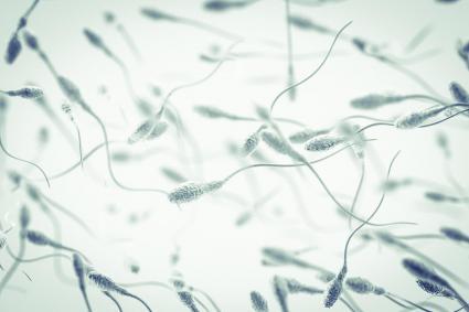 Efecto sobre la fertilidad masculina