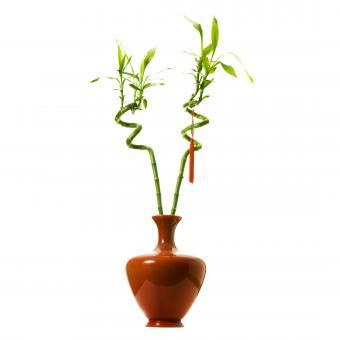 https://cf.ltkcdn.net/es-feng-shui/images/slide/244832-850x850-bamboo-in-a-vase.jpg