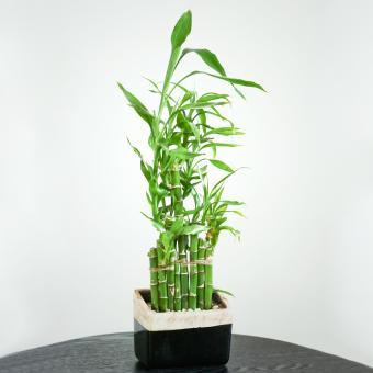 https://cf.ltkcdn.net/es-feng-shui/images/slide/244838-850x850-eight-bamboo.jpg