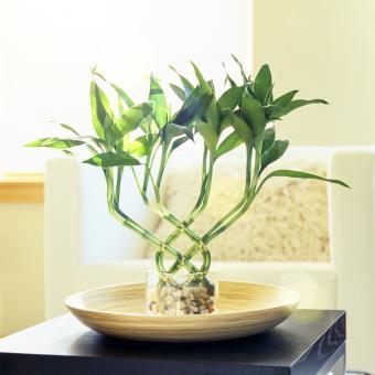 https://cf.ltkcdn.net/es-feng-shui/images/slide/244847-849x850-flexible-bamboo.jpg